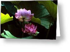 Lotus--dimensions 20h Greeting Card