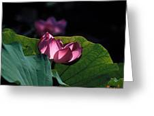 Lotus--echoes Of Light 24h Greeting Card