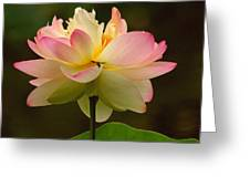 Lotus In The Dark Water Greeting Card