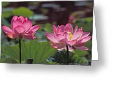 Lotus Pair 24m Greeting Card