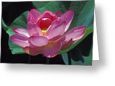 Lotus--secrets Within 24k Greeting Card