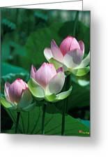 Lotus--stepping Stones 24p Greeting Card