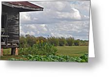 Louisiana Cane Greeting Card