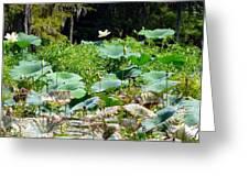 Louisiana Lily Pads Greeting Card