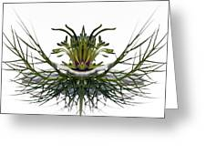 Love In A Mist Greeting Card