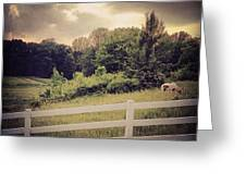 Love This Photo Of A #horse On A #hill Greeting Card by Pete Michaud