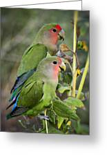 Lovebird Couple  Greeting Card