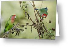 Lovebirds At Play  Greeting Card