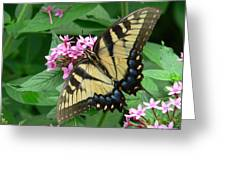 Lovely Butterfly Greeting Card