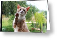 Lovely Cat Greeting Card