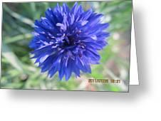 Lovely Dark Blue Gentleman's Button Greeting Card