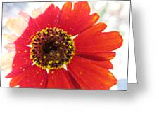 Lovely Effects Greeting Card