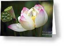 Lovely Lotus Greeting Card by Living Color Photography Lorraine Lynch