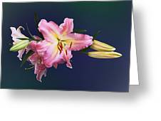 Lovely Pink Lilies Greeting Card