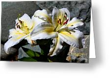 Lovely Sunlit Lily Greeting Card