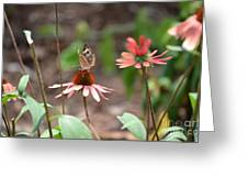 Lover Of Coneflowers Greeting Card