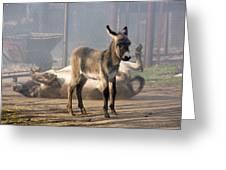Loving Family Of Donkeys Greeting Card by Odon Czintos