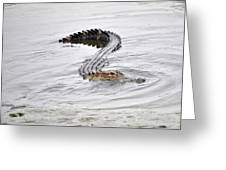 Low Country Marsh Alligator Greeting Card