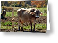 Low Cow Greeting Card
