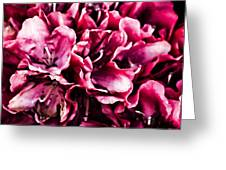 Low Key Pink Azalea Greeting Card