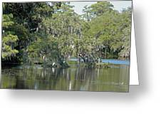 Lowcountry Landscape Greeting Card