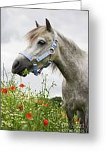 Lulu In The Poppy Field Greeting Card