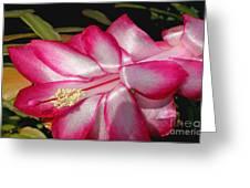 Luminous Cactus Flower Greeting Card