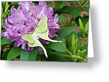 Luna Moth On Rhododendron 1 Greeting Card