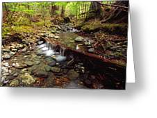 Lupin Creek, Strathcona Provincial Greeting Card