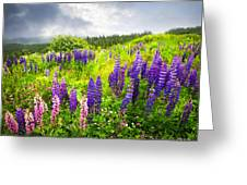 Lupin Flowers In Newfoundland Greeting Card