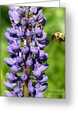 Lupine And Bee Greeting Card