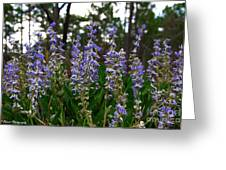 Lupine Patch Greeting Card