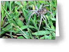Lurking Spider In The Grass Greeting Card