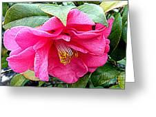 Luscious Pink Hdr Greeting Card