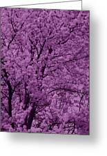 Lush Lavender Greeting Card