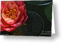 Lush Lily Greeting Card