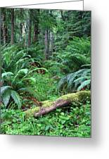 Lush Rain Forest In Olympic National Park Greeting Card