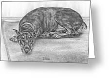 Lying Low - Doberman Pinscher Dog Art Print Greeting Card