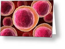 Lymphocyte White Blood Cells, Artwork Greeting Card by David Mack