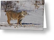 Lynx In Winter Greeting Card