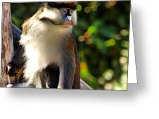 Macaque Greeting Card