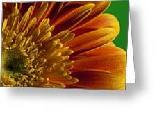 Macro Blumen Greeting Card