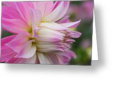 Macro Flower Profile Greeting Card