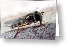Macro Insect Greeting Card