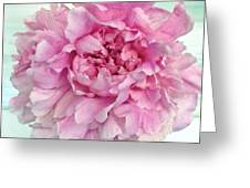 Macro Peony Abstract Greeting Card
