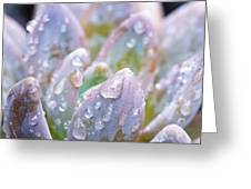 Macro Succulent With Droplets Greeting Card