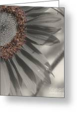 Macro Sunflower In Partial Color Greeting Card