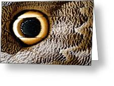 Macrophotograph Of Owl Butterfly Wing Greeting Card