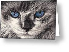 Mad Cat Greeting Card by Elena Kolotusha