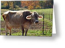 Mad Cow Tail Swish Greeting Card